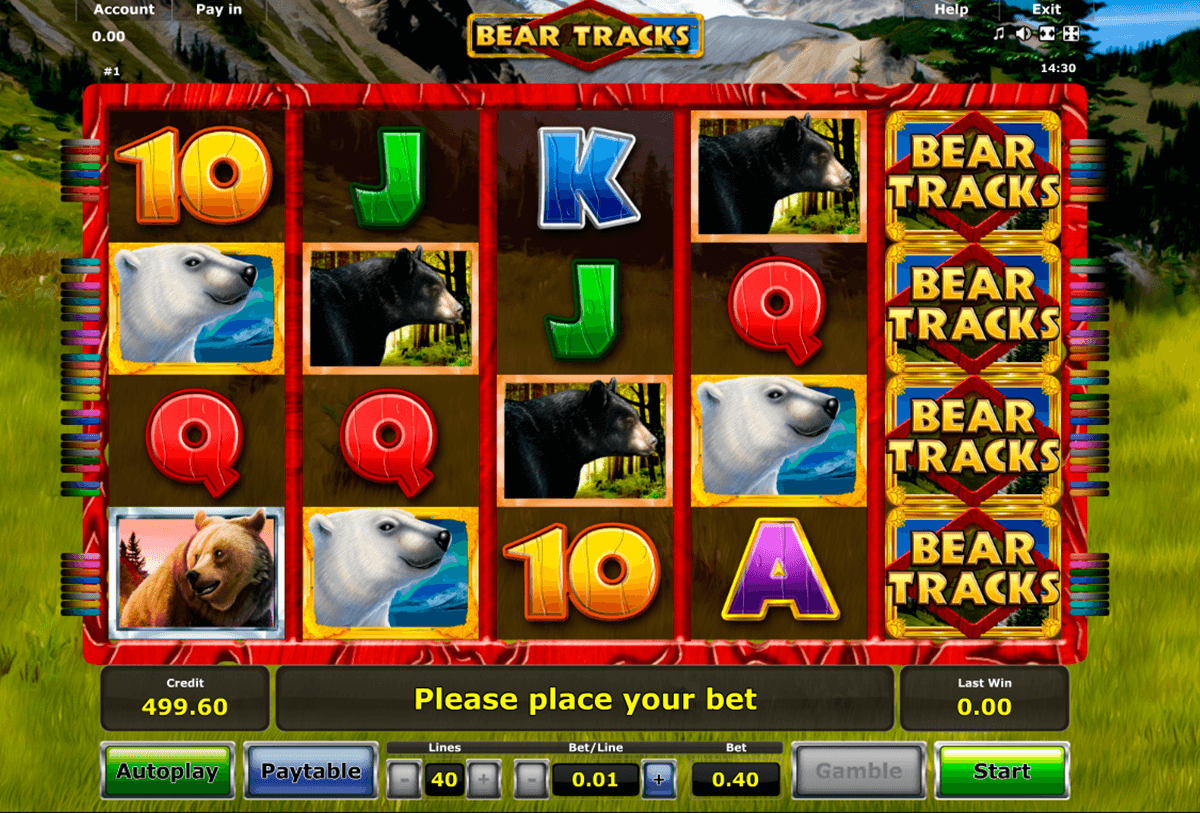 bear tracks novomatic slot machine